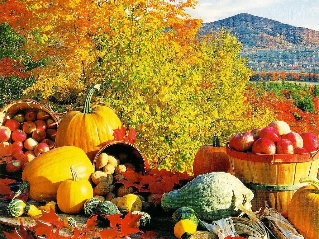 Осень в огороде