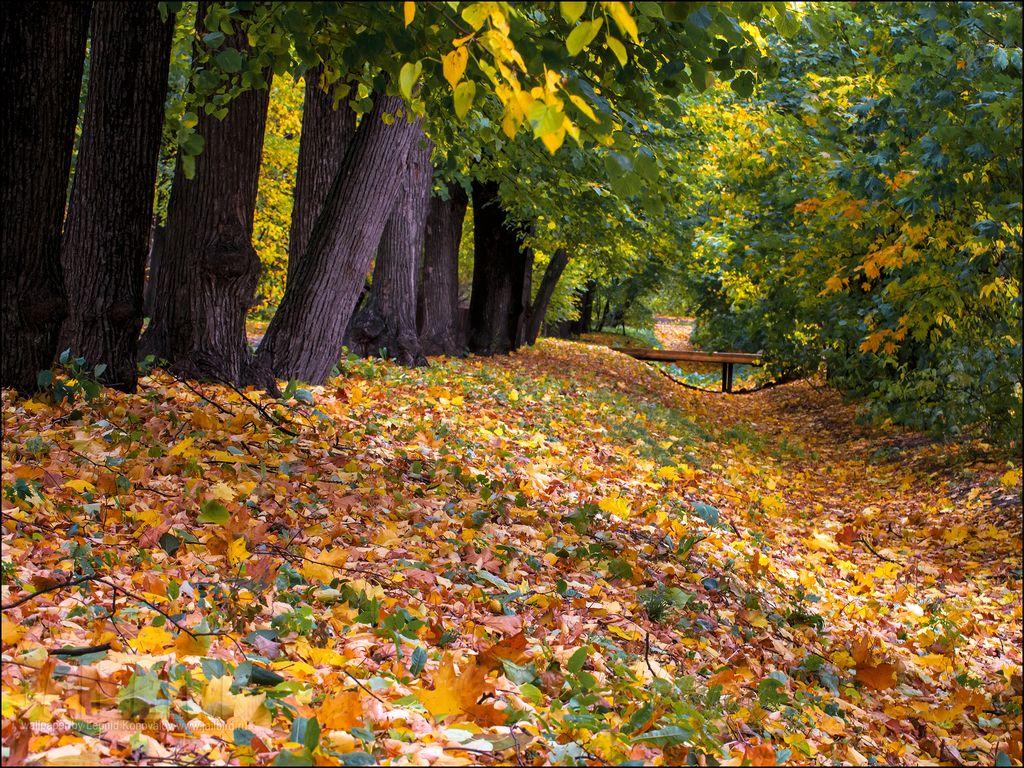 Сад и огород осенью
